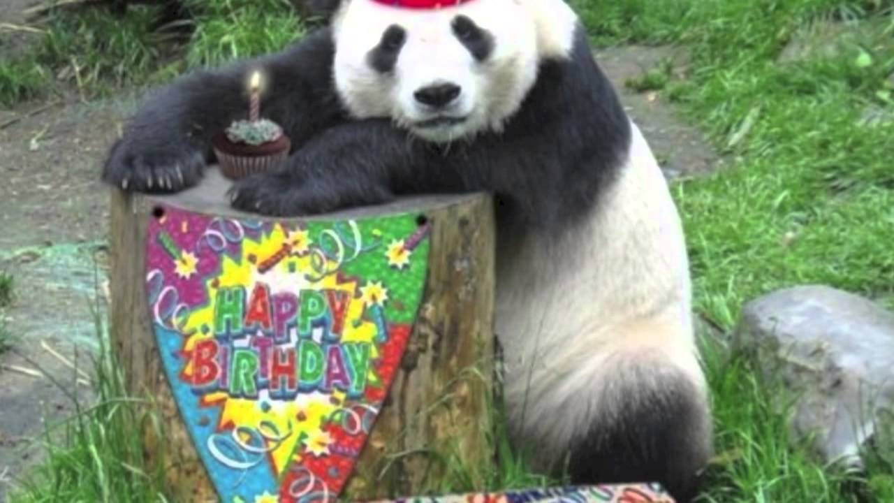 happy birthday panda - YouTube