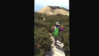 大山キャラボクの木道