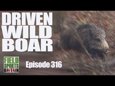 Fieldsports Britain - Driven Wild Boar