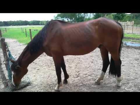 UPDATE   Komt Vrolex al een beetje aan?   Horse Around