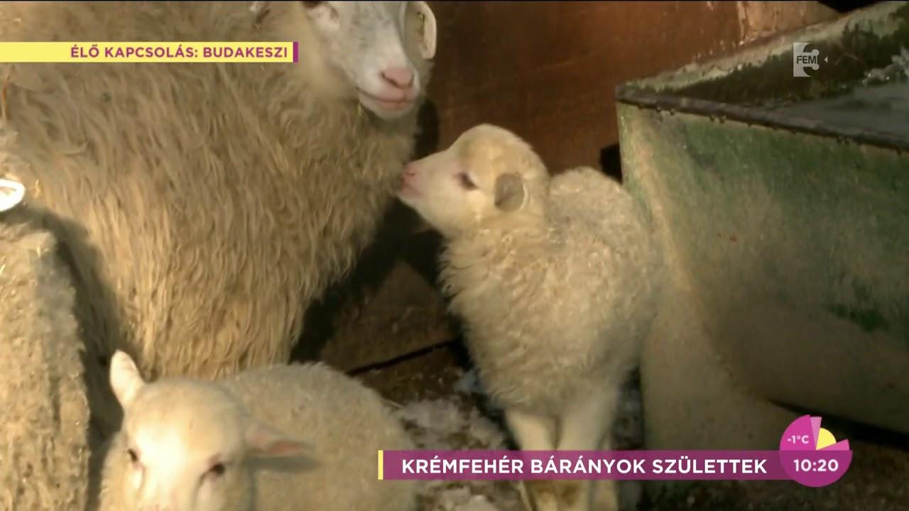 Bárányok féregmegmunkálása bármilyen kortól kezdve, A férgek széles köre ellen - kaiserpizzeria.hu