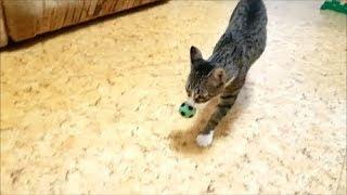 Коты футболисты.Кот Оскар и кошка Маруся играют в футбол. 2 матч