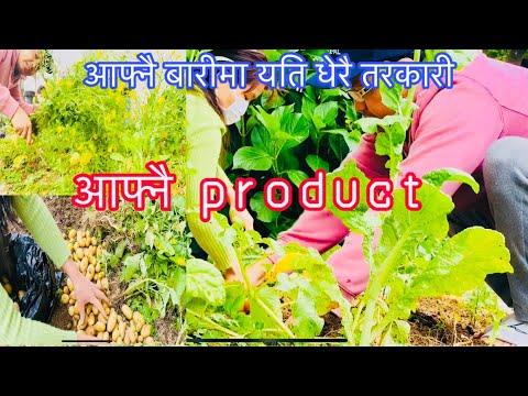 Self vegetable||Nepalese in Japan || khet bari ma kam gardai