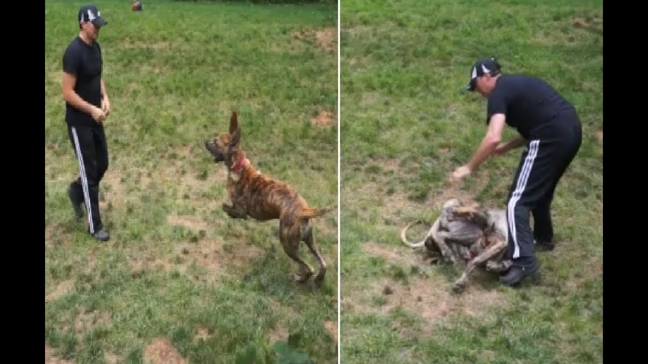 How to Defend Yourself Against Police Dog Misuse Claims