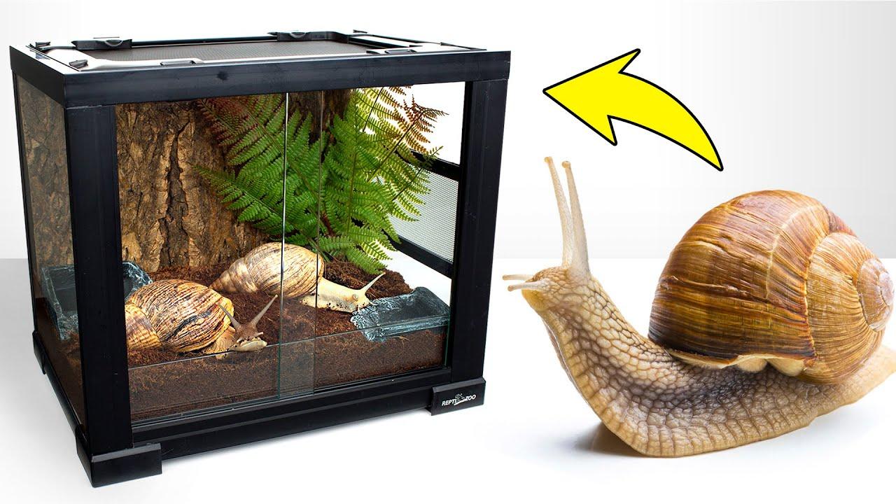 Giant Snail Garry is Exploring His New Cool Terrarium House!