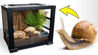 giant-snail-is-moving-into-a-perfect-home-who-will-be-garry-s-new-neighbor