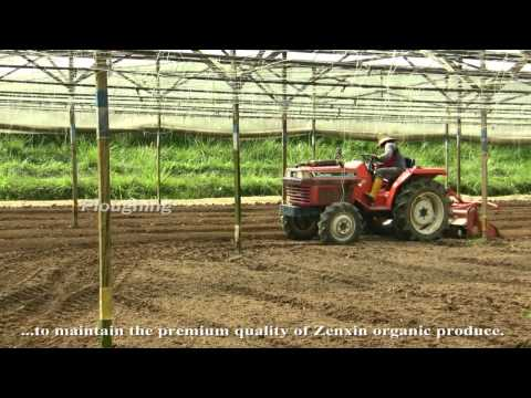 Zenxin Organic Food Introduction