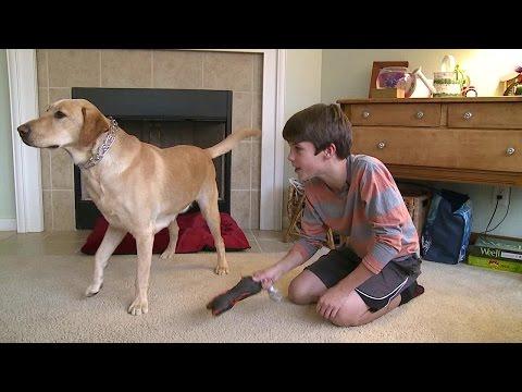 """Diabetic Alert Dogs: """"Man's Best Friend"""" Redefined"""