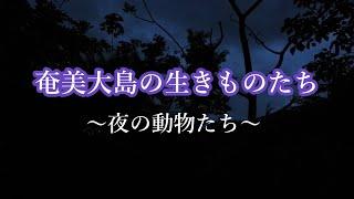 奄美大島の生きものたち~夜の動物たち~