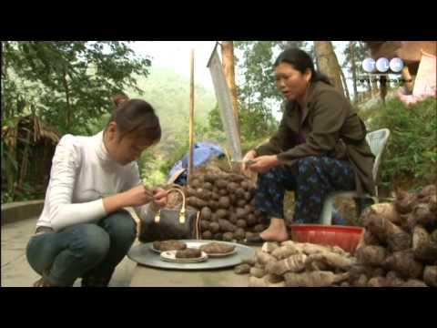 Du lịch khám phá Tây thiên Tam Đảo, Đạo diễn: Phạm Đông Hồng