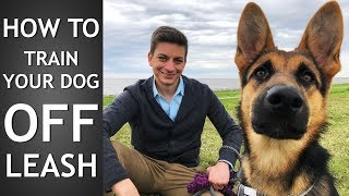 off-leash-training-how-to-train-your-dog-to-listen-off-leash
