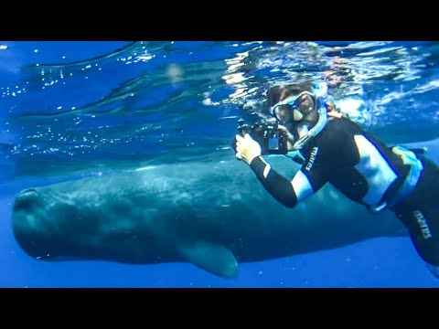 Diving with Sperm Whales- Worlds largest predator!