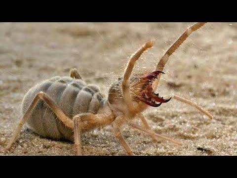 أخطر الحشرات التي اكتشفت مؤخرا  - نشر قبل 2 ساعة