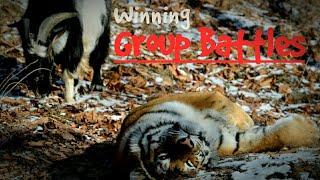 Winning Group Battles️ — Wild Animals Online