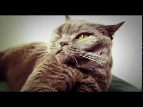 """Cat listens to """"cat and dog singing"""""""