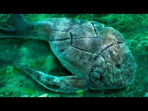Big Heavily Armored Fish Named B. Rex | Prehistoric News