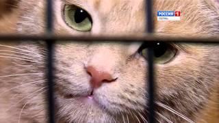 Приют для бездомных кошек Матроскин открыл свои двери