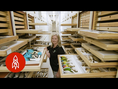 Collecting the World: Inside the Smithsonian