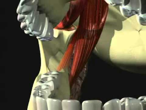 Mandibular Anesthesia - Introduction