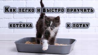 видео Как приучить кошку к лотку?!