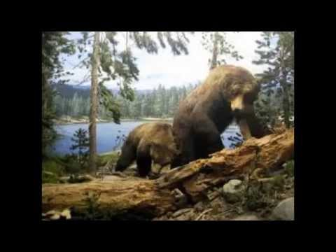 Natural History Museum of Los Angeles - Best Museuns in USA - visit museums online