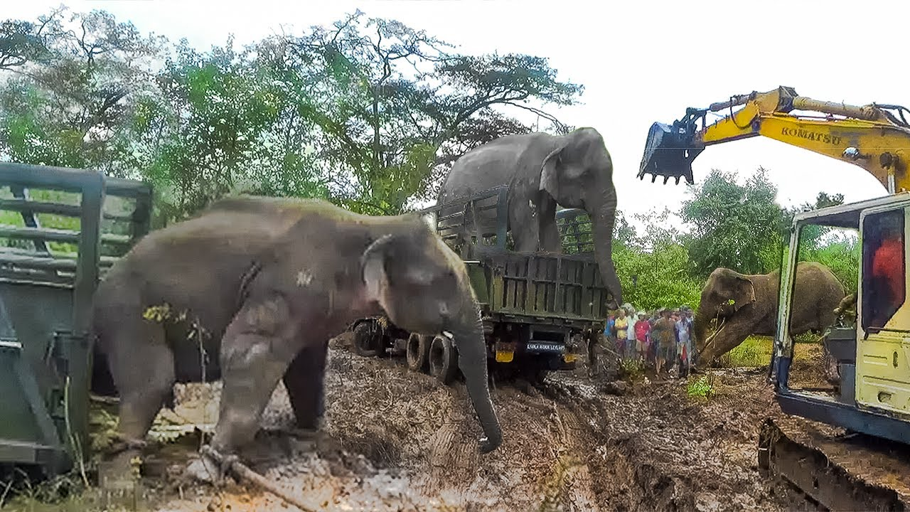 A giant elephant gets a pass to a safer jungle: A Rescue Mission by a wildlife team
