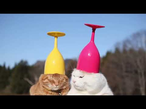 Try Not To Laugh - 2019 - Funny Cat Compilation
