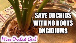 How to save an Oncidium orchid without (or with very few) roots