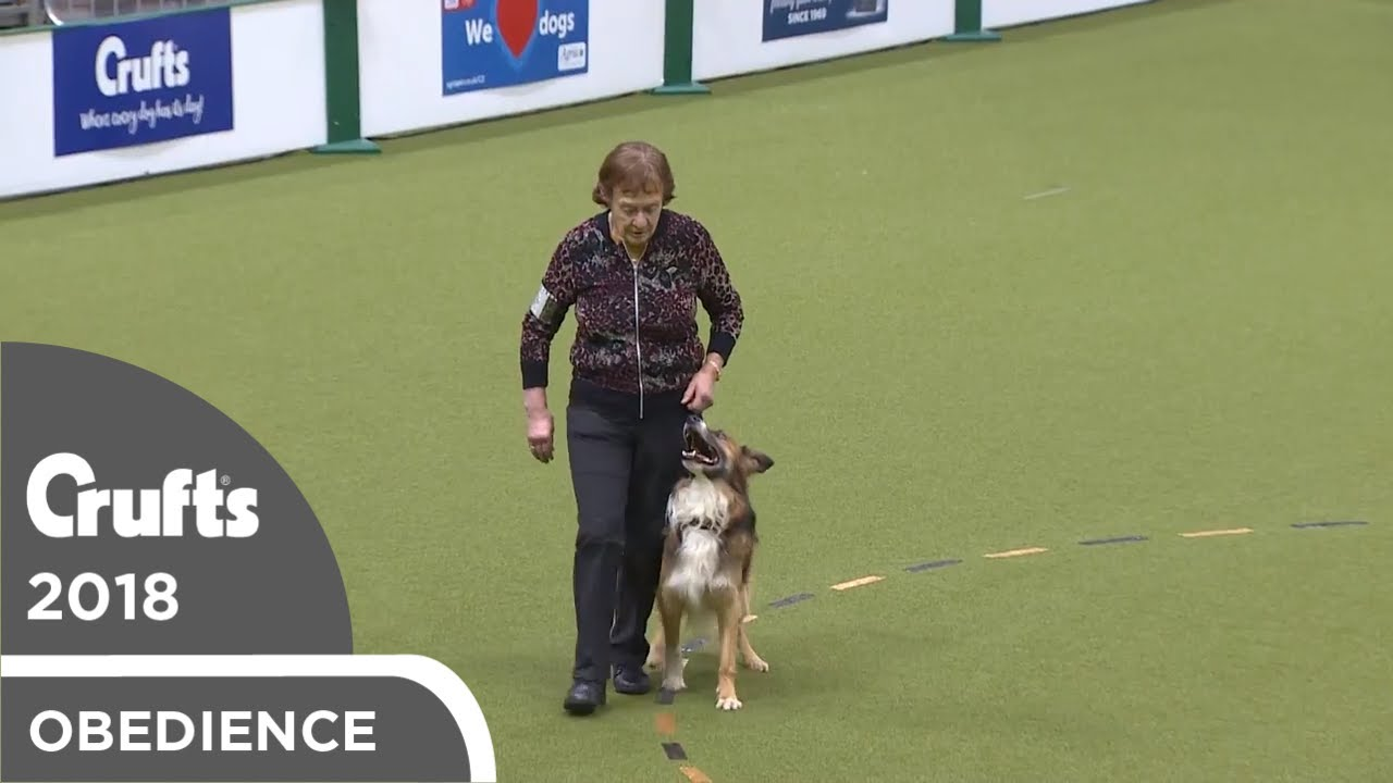 Obedience - Dog Championship - Part 8   Crufts 2018