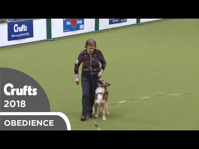 Obedience - Dog Championship - Part 8 | Crufts 2018