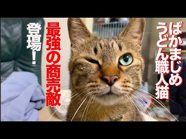 ばかまじめうどん職人猫、最強の商売敵猫が現れる The new Udon cat's coming