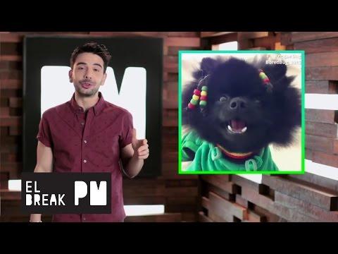 El Break PM - ¡Los perros aman el reggae!