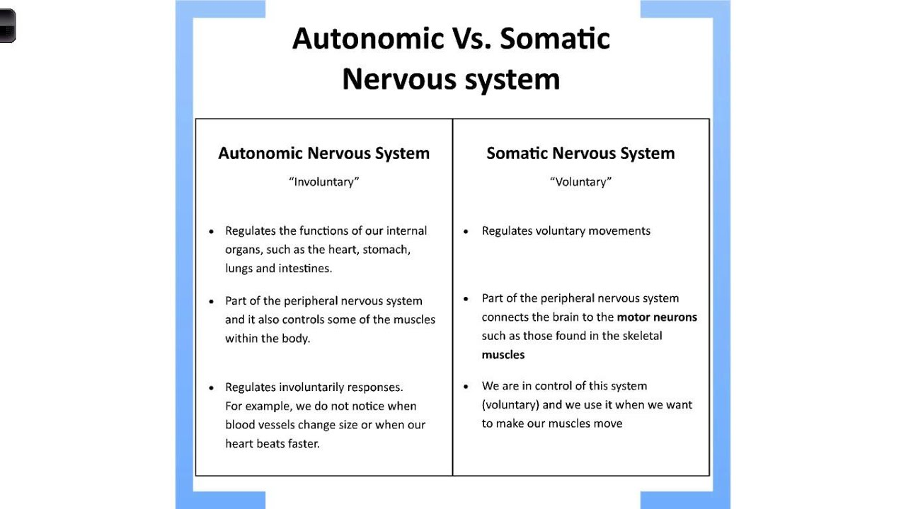 ans nervous system Dysautonomia - autonomic nervous system dysfunction dysautonomia, also known as autonomic nervous system dysfunction or disorder, is a blanket label applied to a variety of conditions that develop, at least in part, because of malfunction or faulty regulation in the involuntary nervous system.