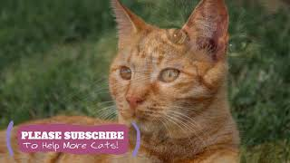 Sleeping Music for Kittens! 2 Hours Help Your Cat Anxious or Restless with Music ☯LCZ114