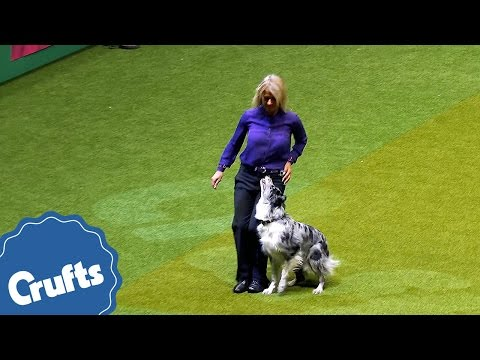 Should I Stay or Should I Fetch | Amazing Dog Obedience
