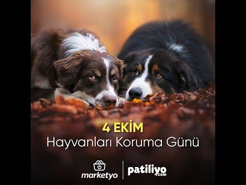 4 Ekim Hayvanları Koruma Günü Besleme Etkinliği