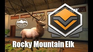 Find you rocky mountain elk hunting trip today. Diamond Rocky Mountain Elk Thehunter Call Of The Wild Youtube