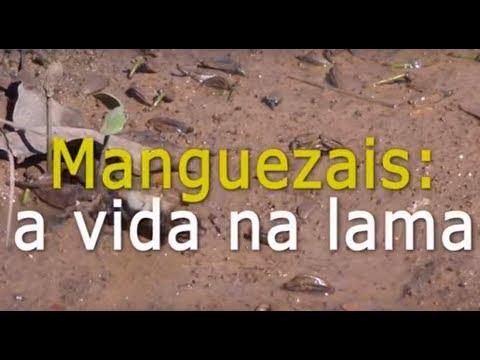A vida na lama: Manguezais Alagoanos