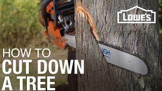 Video How To Cut Down A Tree download MP3, 3GP, MP4, WEBM, AVI, FLV November 2017