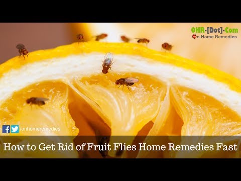 How To Get Rid Of Fruit Flies Home Remedies Fast Youtube
