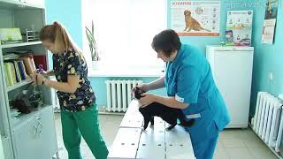 СЮЖЕТ подписка ветеринары 31 08 18