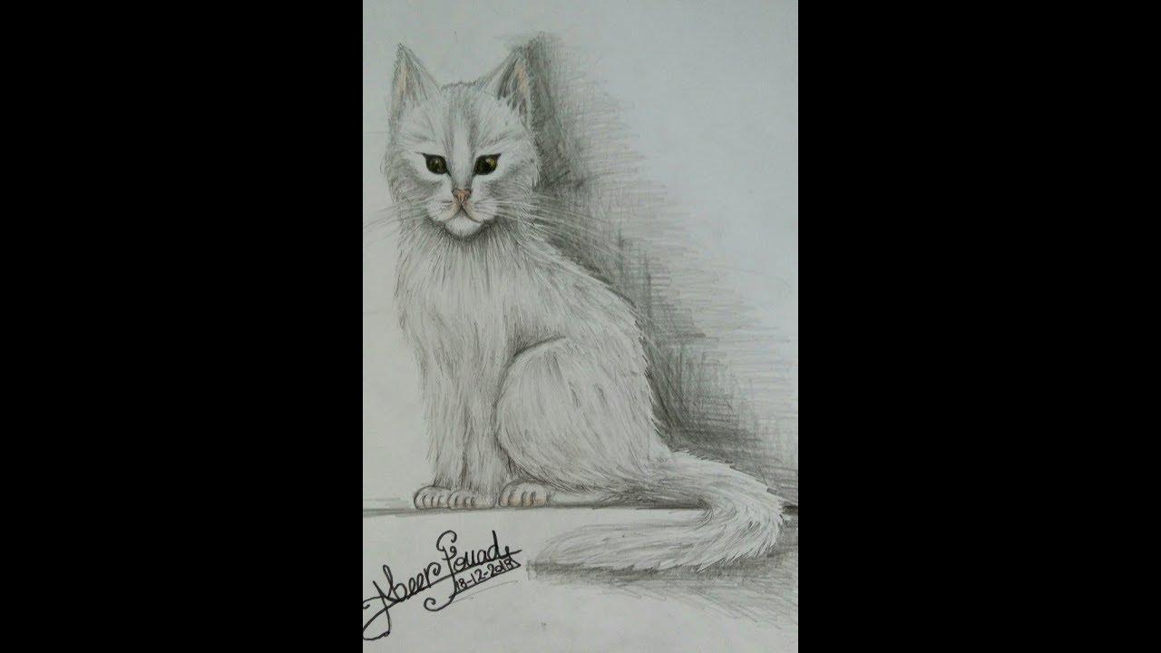 رسم قطة بخطوات بسيطة وسهلة للمبتدئين drawing cat for