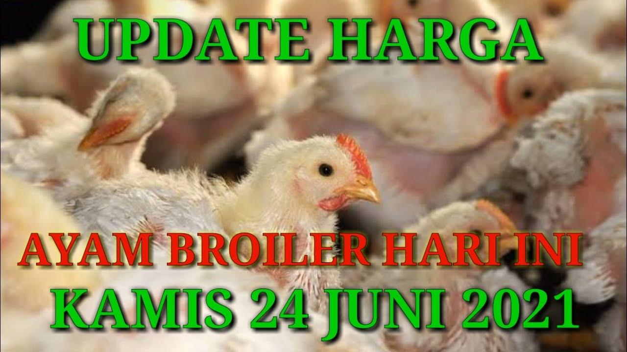 Harga Ayam Broiler Hari Ini Kamis, 24 Juni 2021 - YouTube
