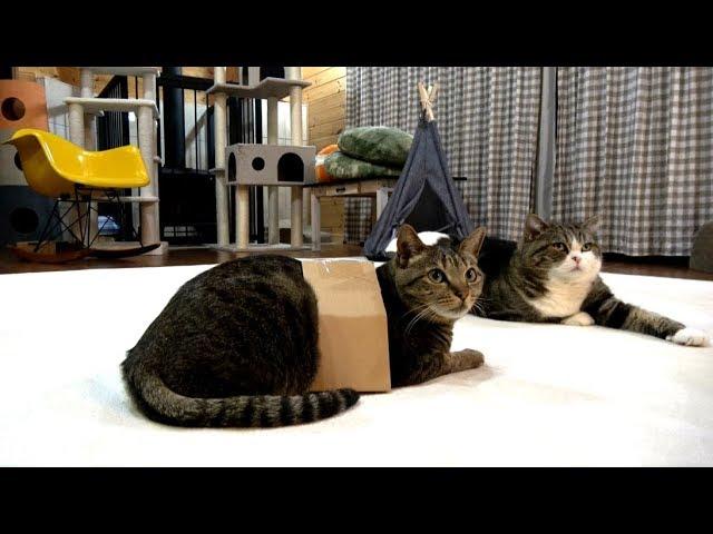 箱に入ってみたはなと-順番待ちするまる-hana-tries-the-box-and-maru-waits-his-turn