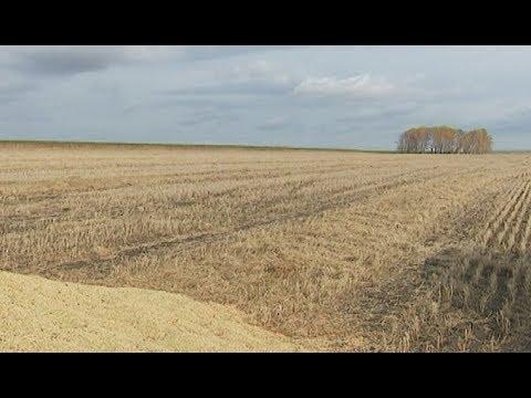 Чесменские фермеры не смогли поделить чечевицу
