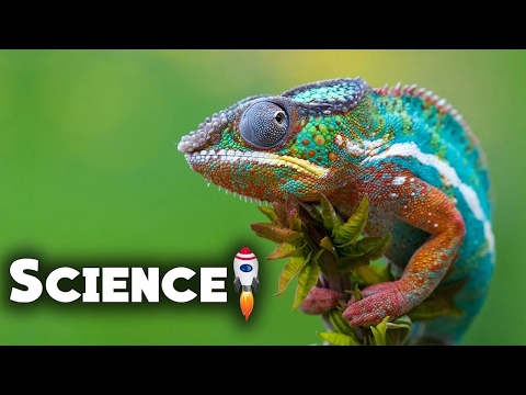 Evolution Animals - Camouflage Animals. Science