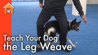 Teach Your Dog The Leg Weave