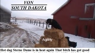 Shutzhund Or Work Dog Rottweilers Herding Cows And In South Dakota Agility Rocky  Hd