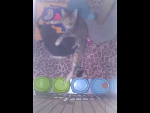 Кошка Фиби кормит приемных котят - YouTube