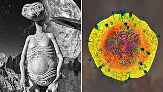 The Unintelligent Life Explained - There Are 1200 More Bacteria On Earth Than Humans